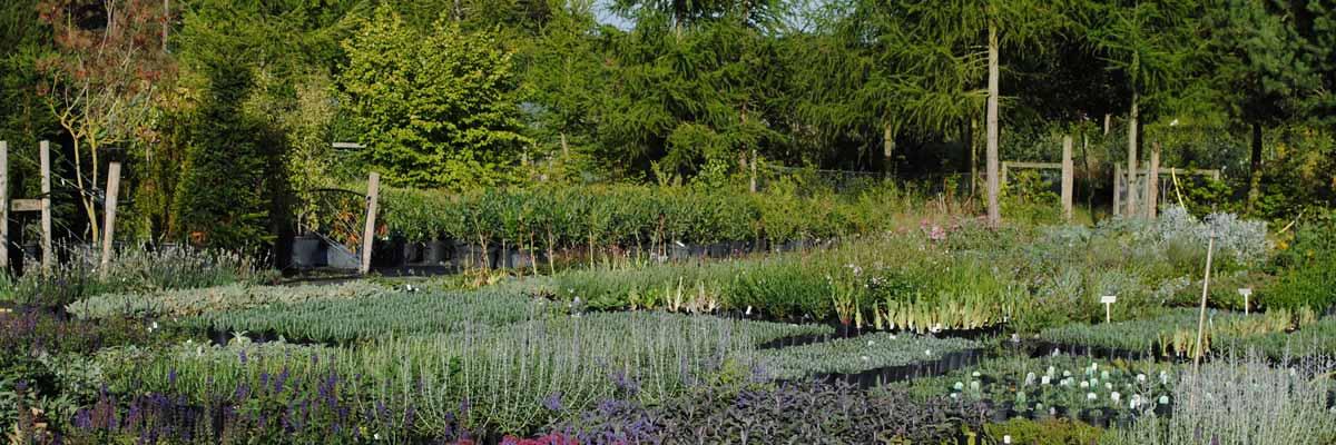 wholesale garden centre Oxfordshire
